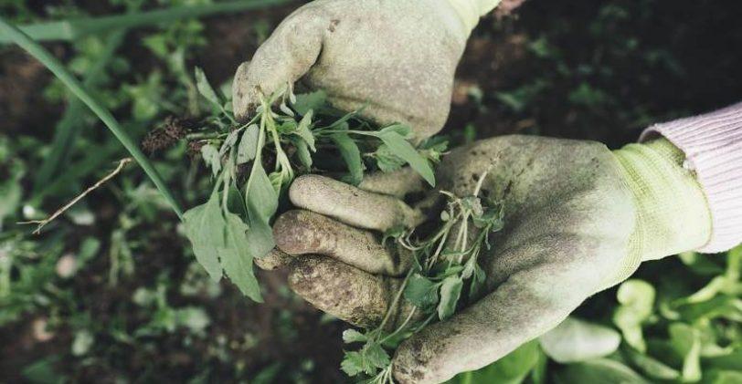 Un broyeur de végétaux pour réduire les déchets du jardin